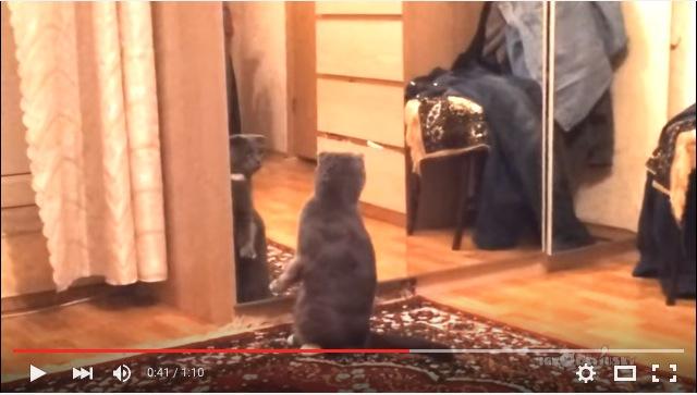 ま…まさかオレってネコなの? う…うそだよね? 鏡に映った自分の姿にびっくり仰天するニャンコさんがこちらです