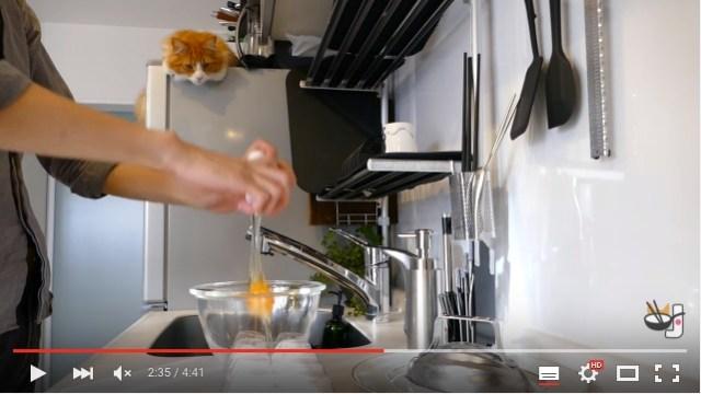 猫がじっと見守ってくれる「オムライスを作る動画」に萌えキュン! 可愛いと美味しそうがめいっぱい詰まってる〜♡