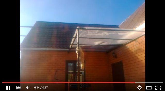 どうやって降りようかニャ…そうだこうしようっと♪ 高い屋根から下りたいニャンコの「グッドアイデア」とは?