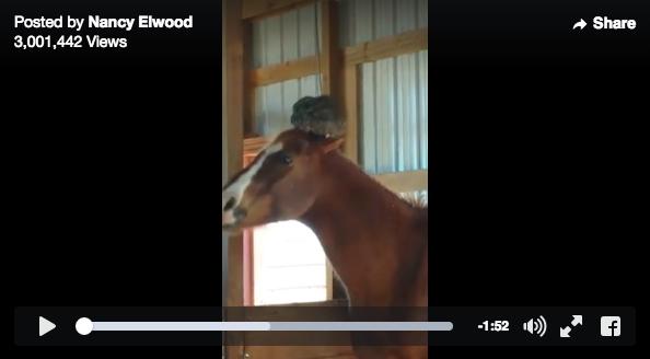 【リアルブレーメン】納屋を見に行ったら馬が頭にニワトリ乗せてた!!! ヤラセかと思いきや「乗せたがってる」チャラい現場も撮影に成功!