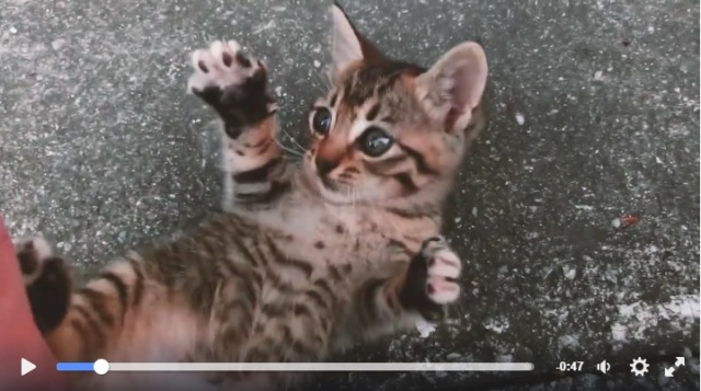 日産「#猫バンバン プロジェクト」のキュートな猫動画! 次々出てくるニャンコたちが愛らしすぎてニヤニヤが止まらないよ~
