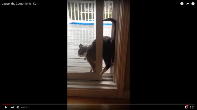 【かわいい】猫が逆立ちで「おしり」からご帰還?…と思ったら全然そうじゃなかったことが判明!