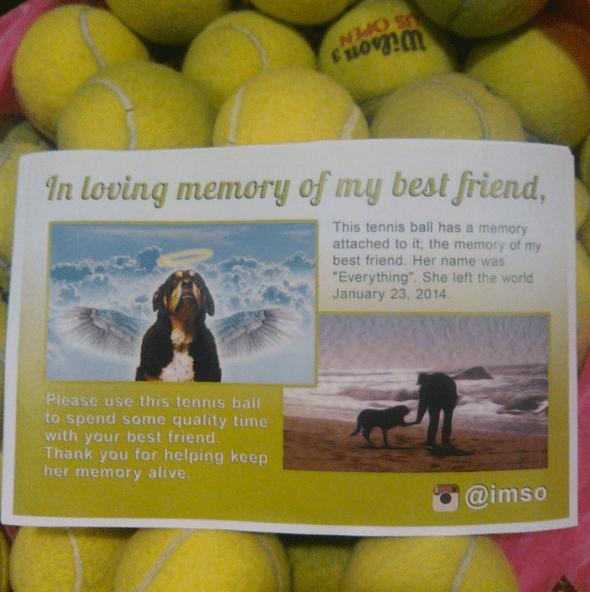 「親友との思い出に」愛犬を亡くした男性が公開した「100個のテニスボール写真」にウルウルしちゃった人が続出