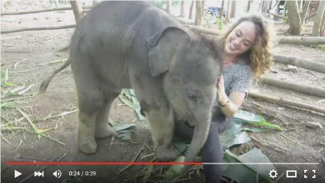 【ほっこり動画】「ハグしてぇ〜♪」赤ちゃんゾウが全力でおねえさんに甘える様子をご覧ください