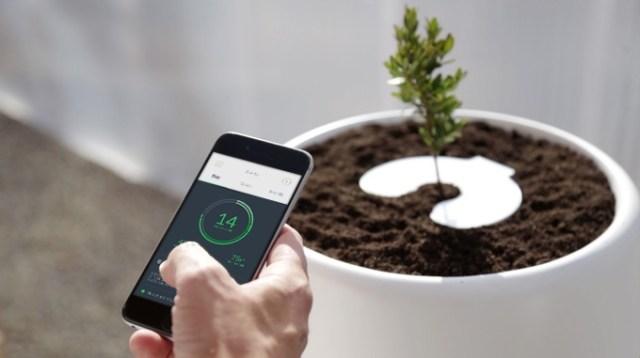 【マジか 】「火葬後の遺灰で植物を育てる」商品が登場! 自動で水やりもしてくれるんだって
