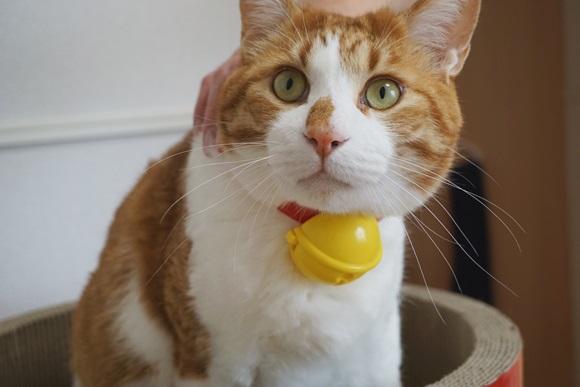 マックのハッピーセット「ドラえもんの鈴」が猫飼いの皆さんを悶絶させてるとネットで話題! うちの猫もドラえもんにしてみた