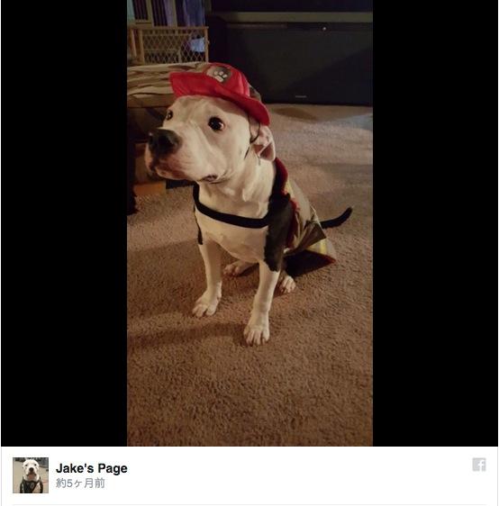 火災から救助された子犬が立派な消防犬に! 苦難を乗り越え新たな一歩を踏み出したワンコに世界が感動