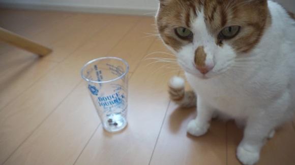 【検証】うちのニャンコはどっち?「猫の利き手を調べる動画」があったので実際にやってみた