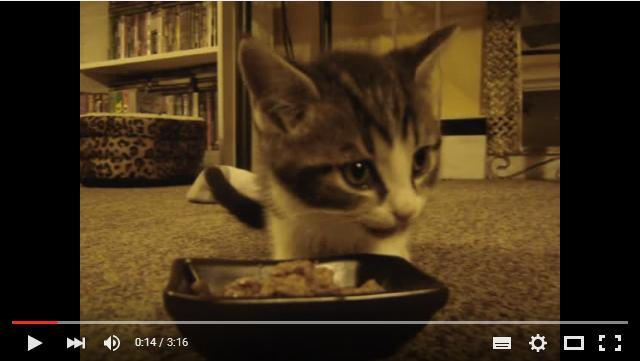 「おいしい♪」と言いながらお食事する子猫ちゃんが大きくなってた! 相変わらずのかわいさに萌えキュンが止まらない!!