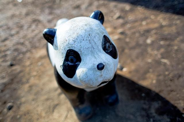 3月11日は「パンダ発見の日」なんだゾ☆ フランス人が初めて見たパンダは「白×黒の毛皮」だったんだって!