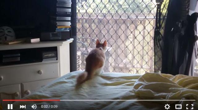 あれは何かニャ? ニャンコさんが窓の外を気にしているようです / 気になりすぎてそのまま突進した結果…!!