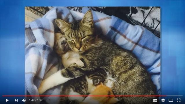 生後2日で母犬を失ったワンコ…抱きしめてくれたのはママニャンコとベビニャンコたち! 優しい家族の姿にじんわり心が温まります