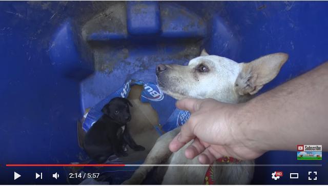 人間に捨てられた犬たちが少しずつ心を開いていく姿に涙……動物保護には根気と愛情が不可欠だということがわかる動画
