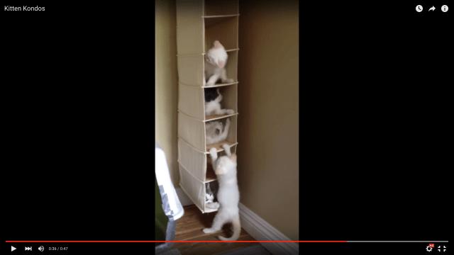 収納に便利な「アレ」を子猫たちのマンションにしてみた結果…可愛い! 1日中観てられるほど可愛い!!!