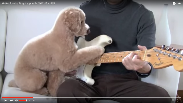 【趣味はギター】お父さんと一緒にギターを弾くトイプーがセンスありすぎ! いい感じのタイミングで「ジャジャーン!!」