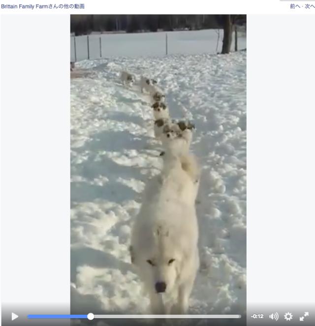 「おーはーよー!」雪道を一列になって走ってくるワンコファミリーの朝の挨拶が可愛すぎる! 全員まとめて抱きしめたい!!!