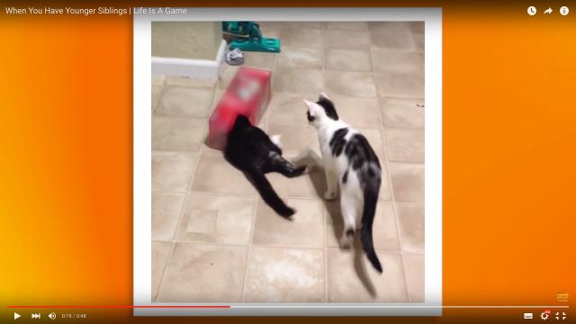 生意気なのに憎めない…弟と妹がいる感じを猫で再現してみた動画に「あるある」が止まらない!