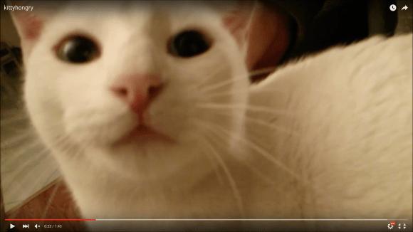 suddenly hungrycat1