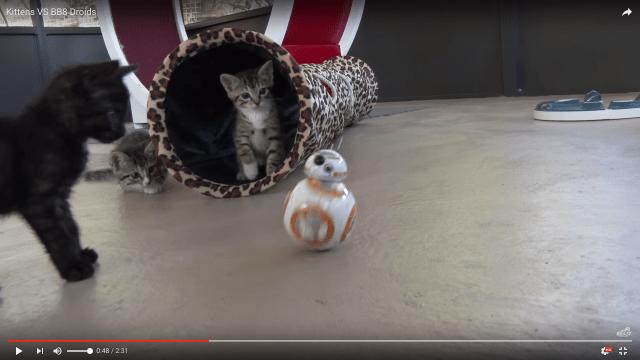 「その動き…たまらニャイ!!」『スターウォーズ』シリーズ史上もっとも猫が喜んだ「BB-8」で子猫たちと遊んでみた動画がかわゆいいいいい!!!!!