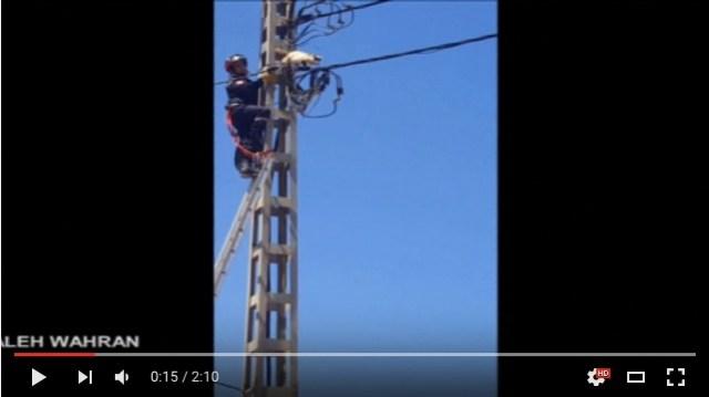 電柱の上のニャンコを助けようとしたら…電線をトコトコ歩き始めちゃった! ドキドキの救出劇の結果!?