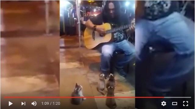 【最高の観客】ギター演奏する男性を超真剣に見つめる子猫たち! 最後まで熱心に聴いてくれる姿にキュン♪