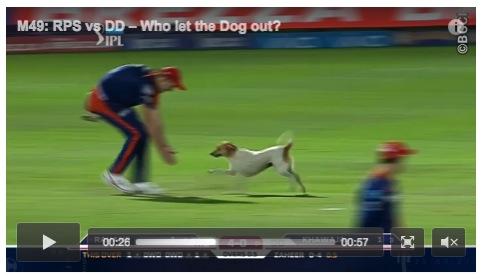 クリケットの試合会場に犬が乱入! 追い出そうとしているんだか戯れているんだかわからない件