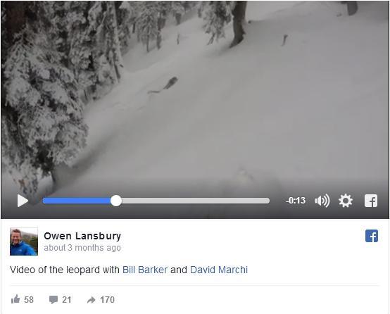 【真相はいかに】雪山でスキーをしていたら…機敏な動きのヒョウに遭遇! 絶滅危惧種ユキヒョウかも?