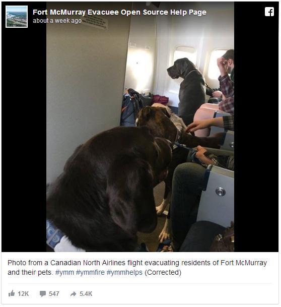 【ノアの箱船のよう】ペットが飛行機で飼い主と同席に! カナダの山火事避難者のため航空会社が下した英断が話題に