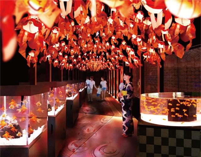 気分はお江戸の夏祭り? すみだ水族館「お江戸の金魚ワンダーランド」が幻想的! さまざまな色の金魚たちがひらひら泳ぐよ♪
