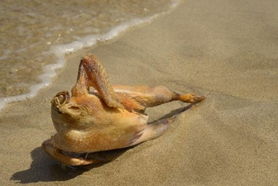 丸裸なんて大胆セクシーすぎる! 鶏肉だけど! 鶏肉と過ごした夏がテーマの写真集『鶏夏』が発売されるようです