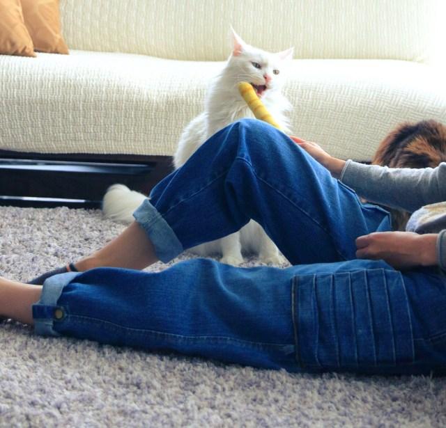 で、出たー、猫にモテるための究極ジーンズ!! つめとぎがしやすいプリーツ状のポケットなど「猫モテ」要素が満載!