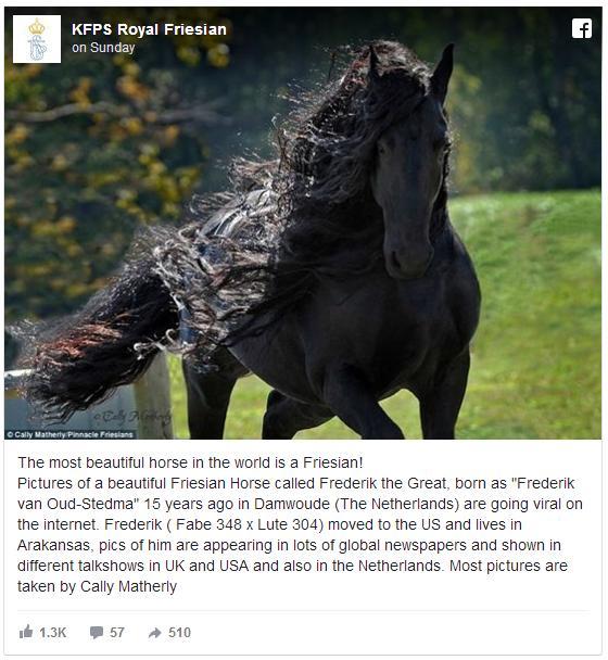 「世界一ハンサムな馬」と名高いフレデリックさんが美しすぎ! うっかり恋に落ちてしまいそうなレベル