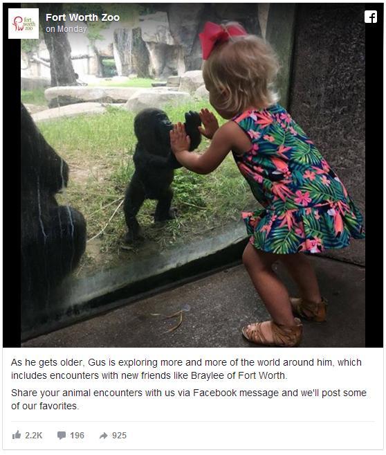 【動物園の奇跡】生後5カ月のゴリラと2歳の少女の気持ちが通じあった決定的瞬間をカメラがとらえた!