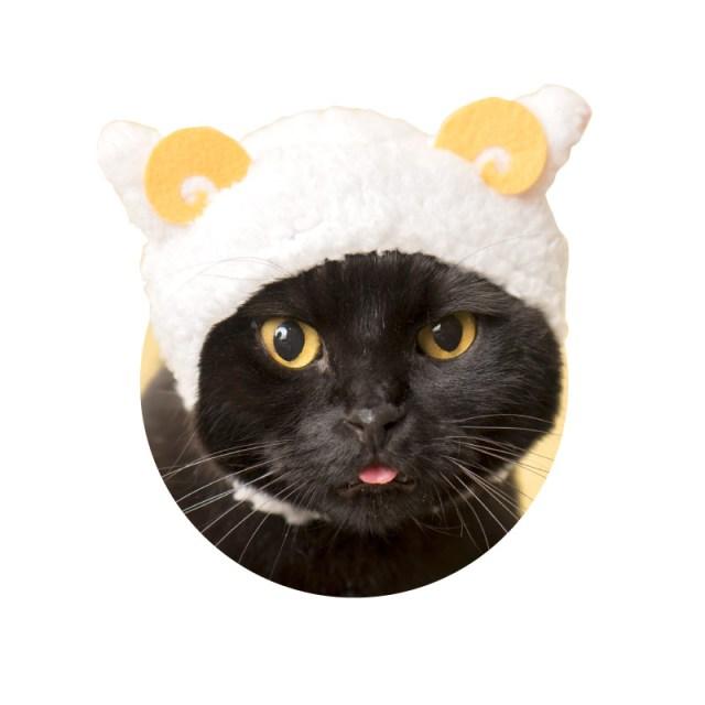 我が家のニャンコが「ひつじ」に変身!? 猫用のかぶりもの「ねこひつじちゃん」がガチャガチャに登場!