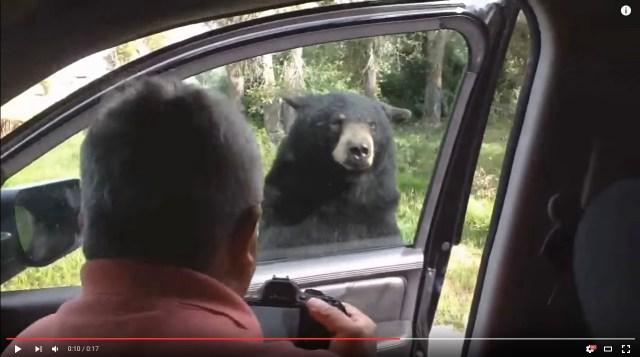 【衝撃】クマ「やぁ(ガチャッ!)」人間「ギャーッッ(バタン!)」クマが車の扉を開ける珍事、その瞬間のパニック映像