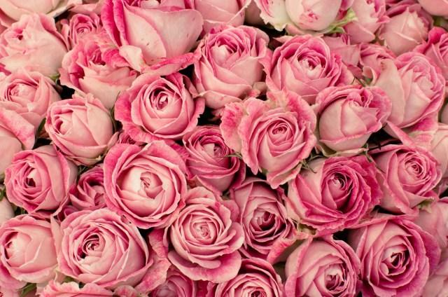 バラの花言葉は「数」でガラっと変わる! 17本のバラは「絶望的で挽回できない愛」て意味なのです / 6月2日は「ローズの日」