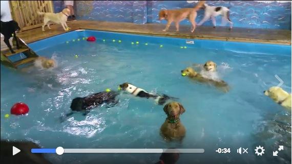 みんな大はしゃぎしているプールの中で1匹だけ「スン…」と直立不動のワンコ! ジワジワと笑いがこみ上げる動画をご覧ください☆