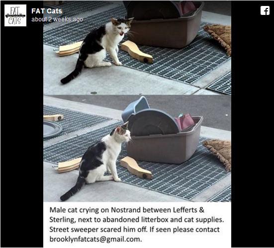 猫用グッズと一緒に捨てられていた猫を発見…ニューヨークに「オスの捨て猫が多い」ことの理由とは?