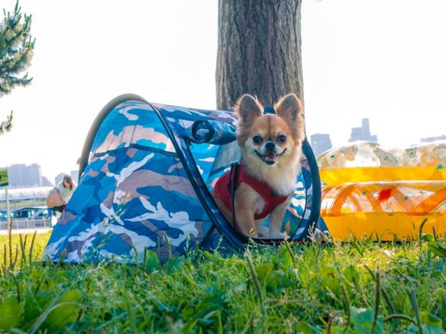たった1秒で設置できるペット用テントが超便利♪ キャンプはもちろん非常用ケージにも使えるよ!