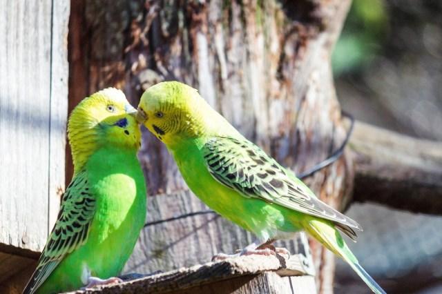 6月12日は「恋人の日」だよ♪ ブラジルでは恋人同士が写真をプレゼントし合う日なんだって!
