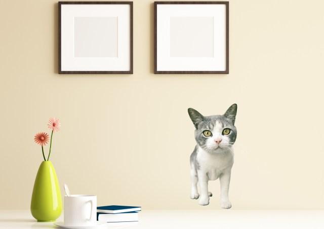 「ペット禁止」のお部屋でもニャンコと暮らせるニャ♪ 妙にリアルなニャンコのウォールステッカーが新発売だよ!