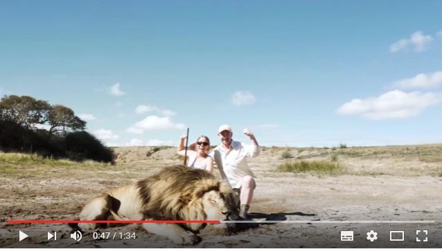 殺したライオンと嬉しそうに記念撮影するカップルに悲劇が…! トロフィーハンティングの現状について考えさせられる動画