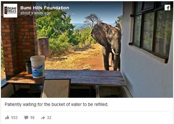野生の象がとつぜん家の前に現れた! 密猟者に撃たれ助けを求めてやってきた模様