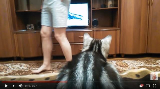 テレビに熱中しているニャンコ「そこに立ったらテレビが見えないニャン!」視界をさえぎられたときの動きがめちゃカワイイ!