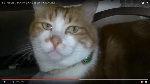 飼い主「しあわせなら手をたたこう」猫「ニャー!」って言って欲しい! 挑戦したら、全然違うところで返事が返ってきちゃった