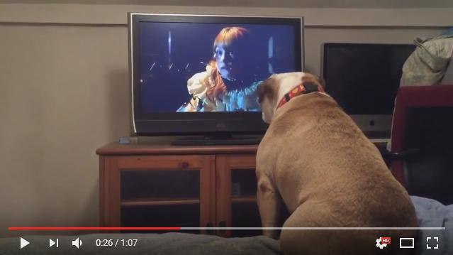 【胸キュン動画】「お願い早く逃げて!」ホラー映画の少女をめちゃくちゃ心配するワンコがキュートなのです