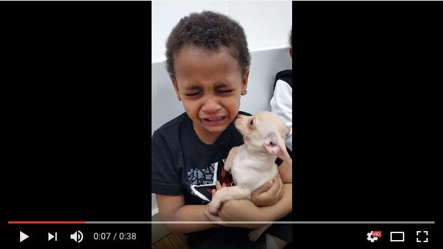 【心が洗われる】小さなチワワを抱いた男の子が大号泣! その可愛すぎる理由とは?