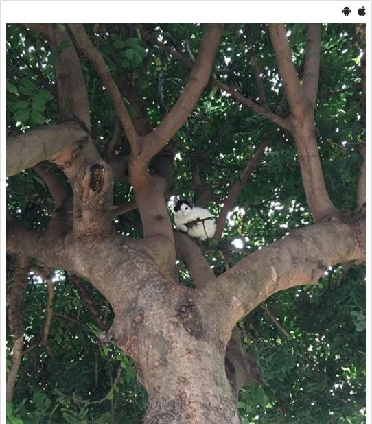 【奇跡のショット】木の上から視線を感じるような…と思ったら、可愛い猫ちゃんのスナイパーが狙ってる!?