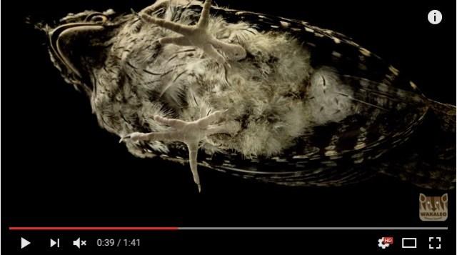 動物をガラス越しに下から見てみよう♪ なんだか新しいことが発見できそうな101秒間の動画