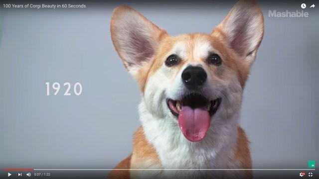 【悶絶】「コーギー100年の歴史」を1分間で振り返る動画が登場だワン!! 次々に時代を象徴するルックに早変わり…しちゃうの?